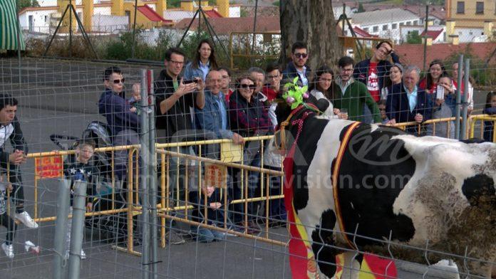 Caca de la vaca 2018