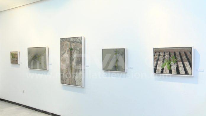 Exposición Galería José Pedraza